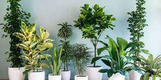 Photo of The Collection Of Indoor Plants For Offices That Can Enhance Your Working Environment