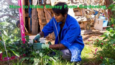 Photo of How to Make Money From Gardening
