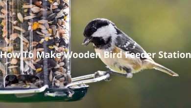 Photo of How To Make Wooden Bird Feeder Station