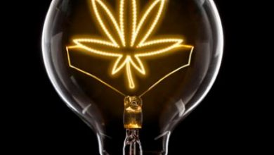 Photo of The Best Tech Solutions For Cannabis Business